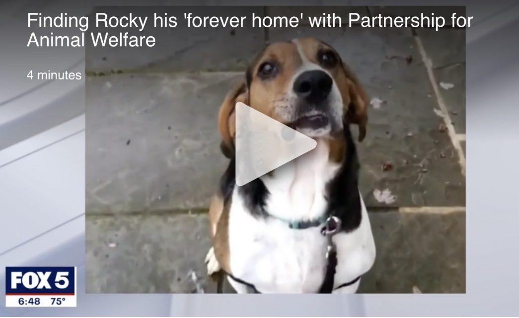 Rocky on Fox 5 News